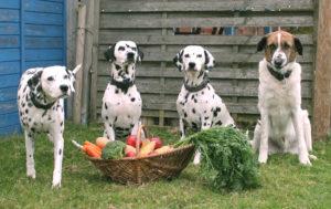 Vegane Ernährung bei Hund und Katz
